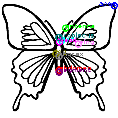 butterfly_0038.png