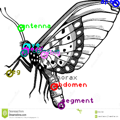 butterfly_0039.png