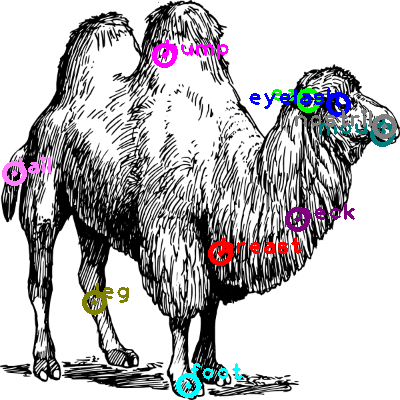 camel_0019.png