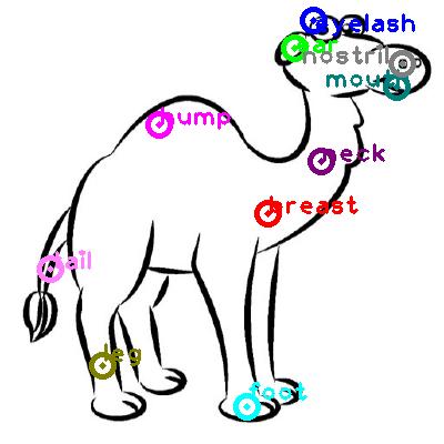 camel_0027.png