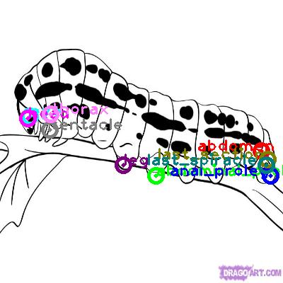 caterpillar_0000.png