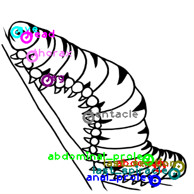 caterpillar_0010.png