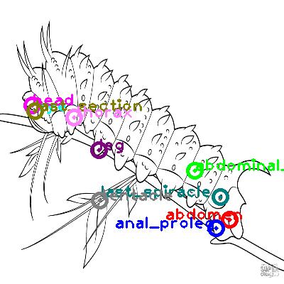 caterpillar_0011.png