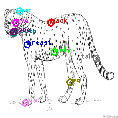 cheetah_0003.png