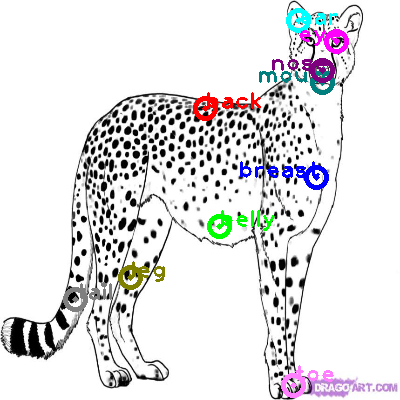 cheetah_0007.png