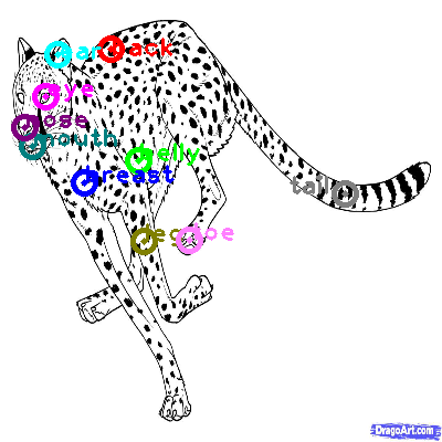 cheetah_0012.png