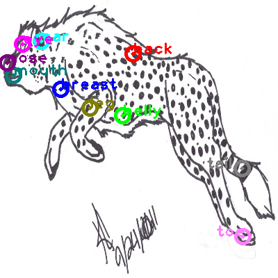 cheetah_0017.png