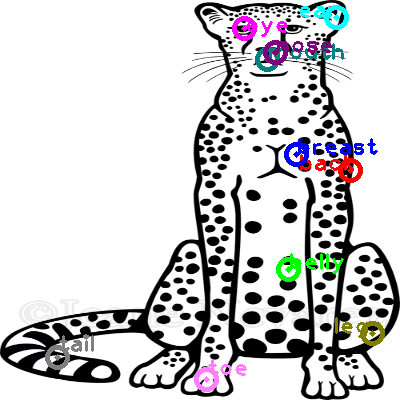 cheetah_0020.png