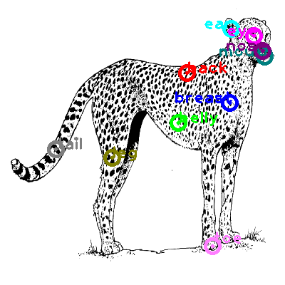 cheetah_0021.png