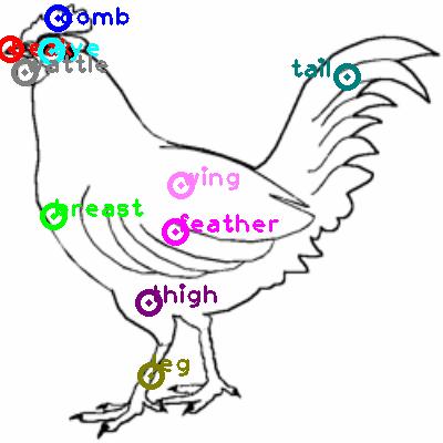 chicken_0010.png