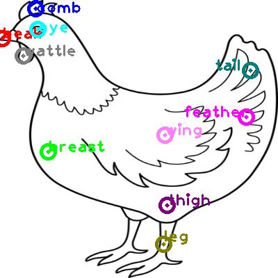 chicken_0013.png