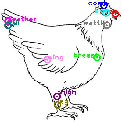 chicken_0024.png