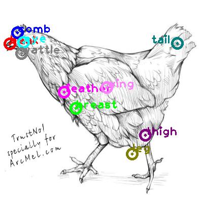 chicken_0040.png