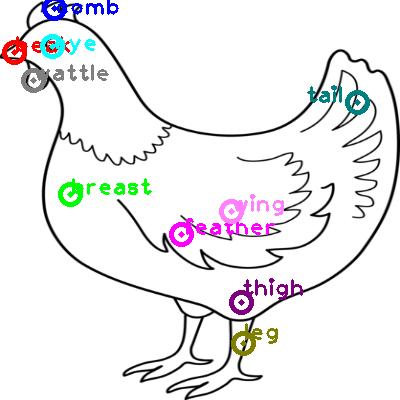 chicken_0058.png