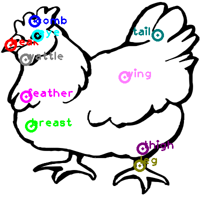 chicken_0063.png