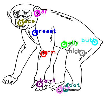 chimpanzee_0002.png