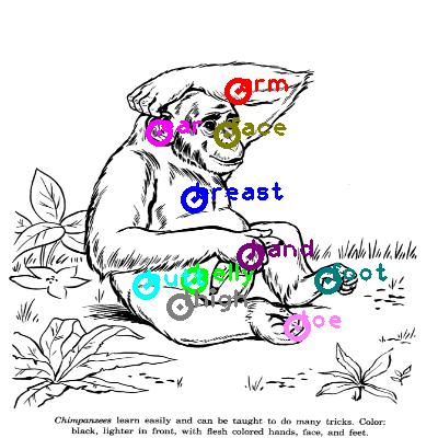 chimpanzee_0011.png