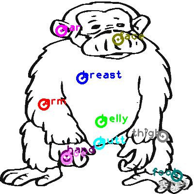 chimpanzee_0019.png