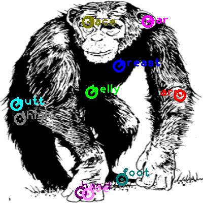 chimpanzee_0020.png