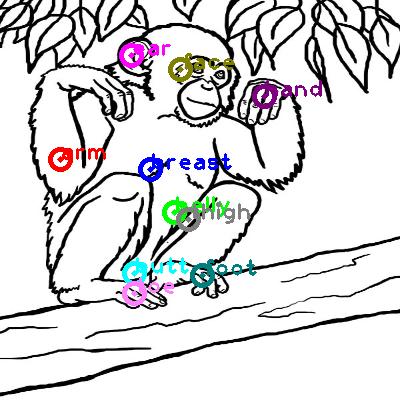 chimpanzee_0021.png