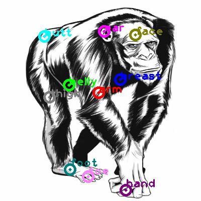 chimpanzee_0022.png