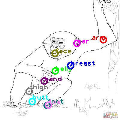 chimpanzee_0023.png