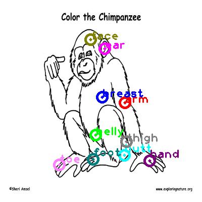 chimpanzee_0027.png