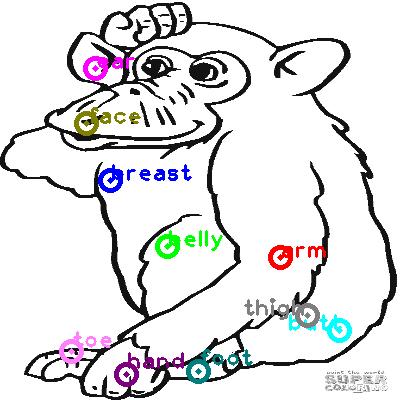 chimpanzee_0028.png