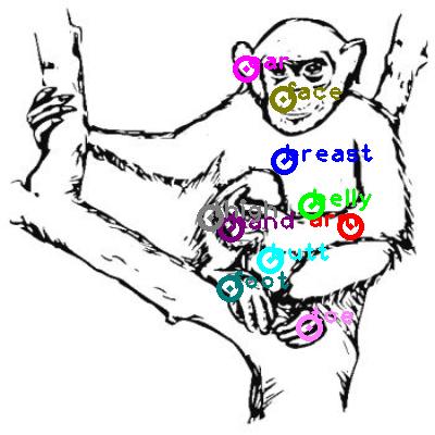 chimpanzee_0032.png