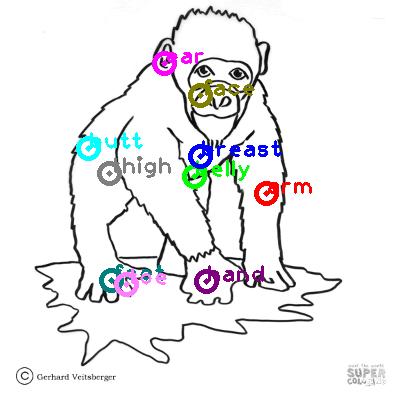 chimpanzee_0033.png