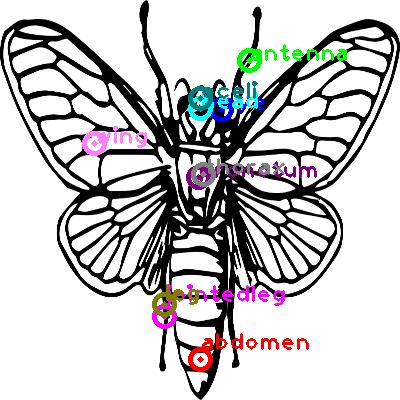 cicada_0001.png