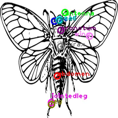 cicada_0002.png