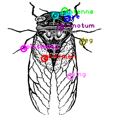 cicada_0004.png