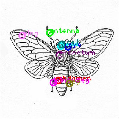 cicada_0005.png