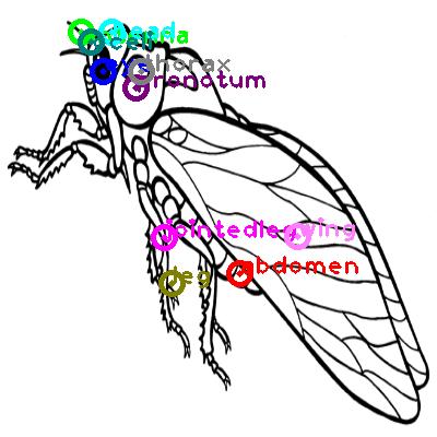 cicada_0006.png