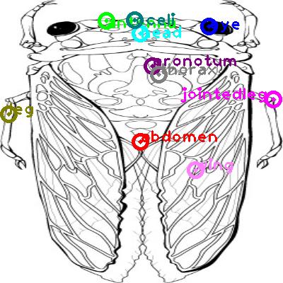 cicada_0007.png
