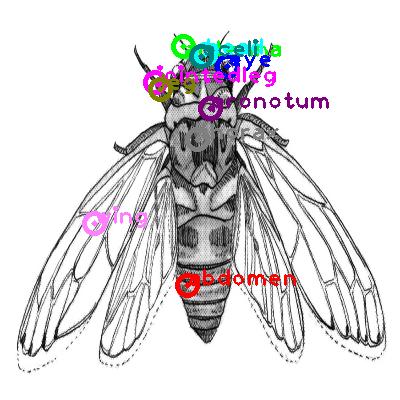 cicada_0009.png