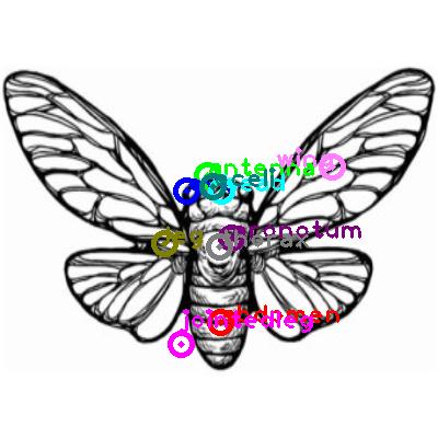 cicada_0012.png