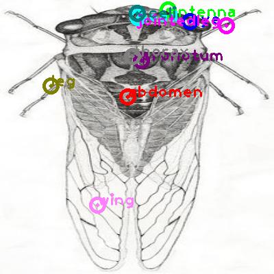 cicada_0014.png