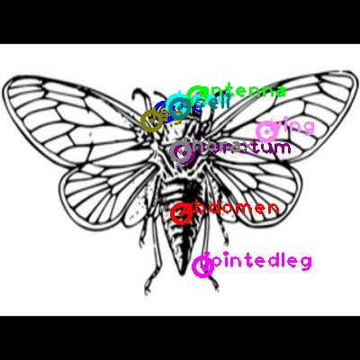 cicada_0017.png