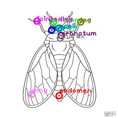 cicada_0020.png