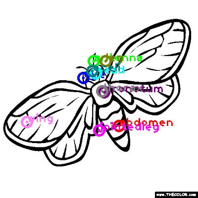 cicada_0021.png