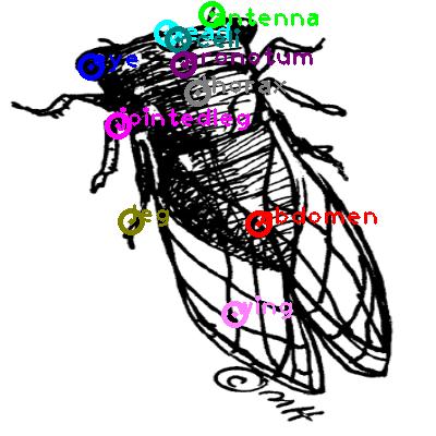 cicada_0023.png