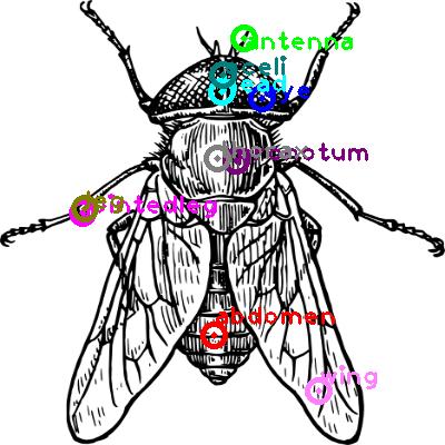 cicada_0024.png