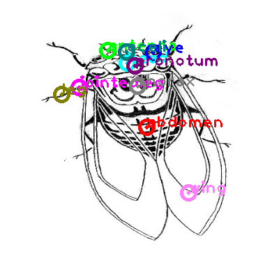 cicada_0025.png
