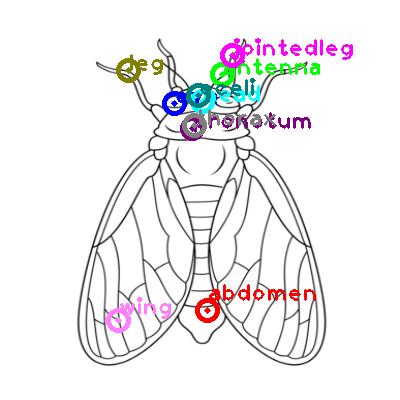 cicada_0027.png