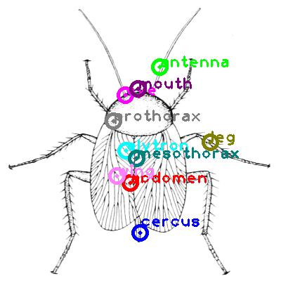 cockroach_0007.png