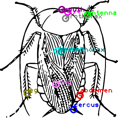 cockroach_0012.png