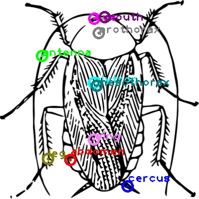 cockroach_0019.png