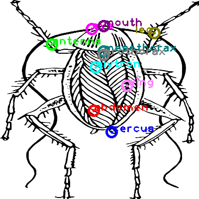 cockroach_0024.png